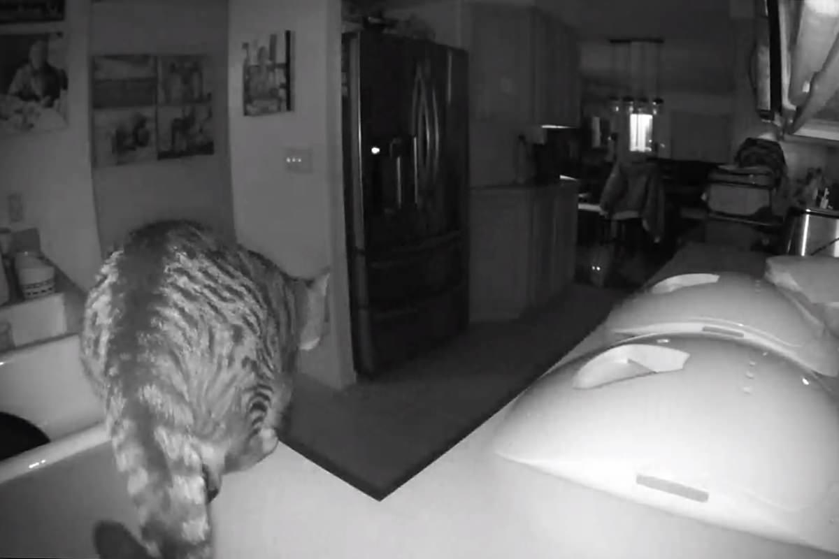Alarm Cats