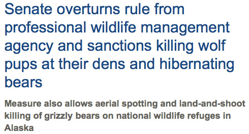 Senate sanctions killing hibernating bears and pups in their den