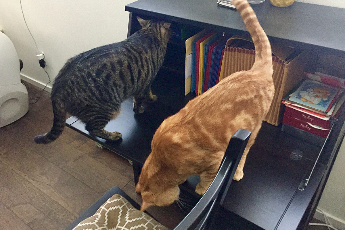 Kitties Exploring my Desk!