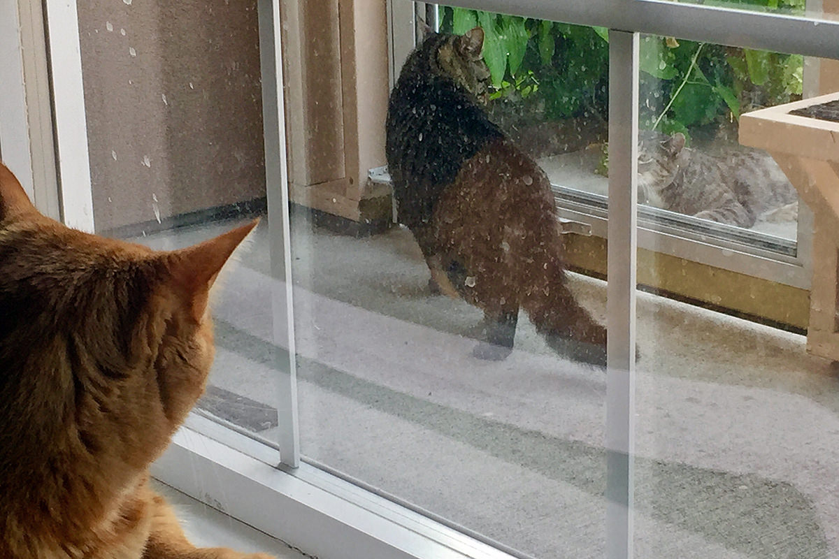 Cats Watching Cats Watching Cats