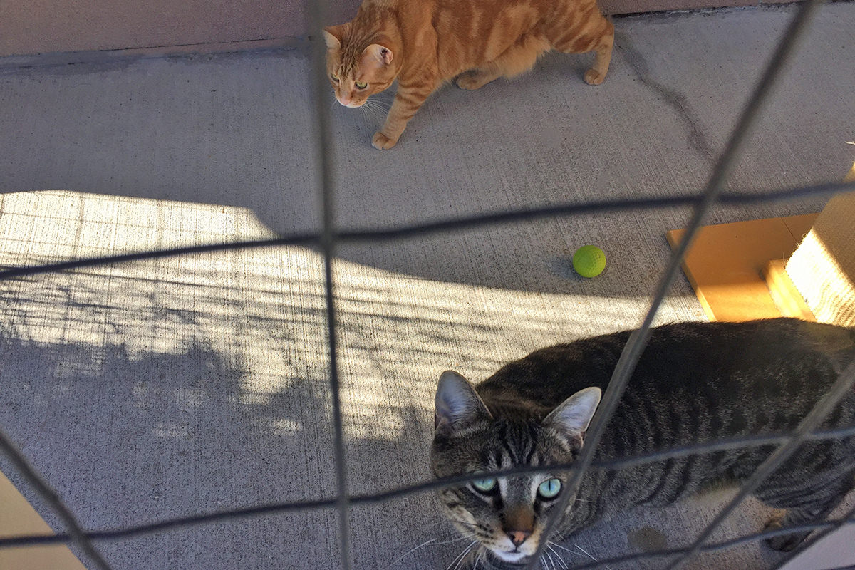 Total Eclipse Catio Cats!
