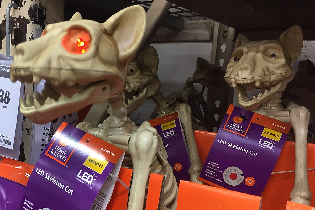 every year i run to home depot hoping to find halloween decorations on half price closeout but all the cool ones like light up skeleton cats are