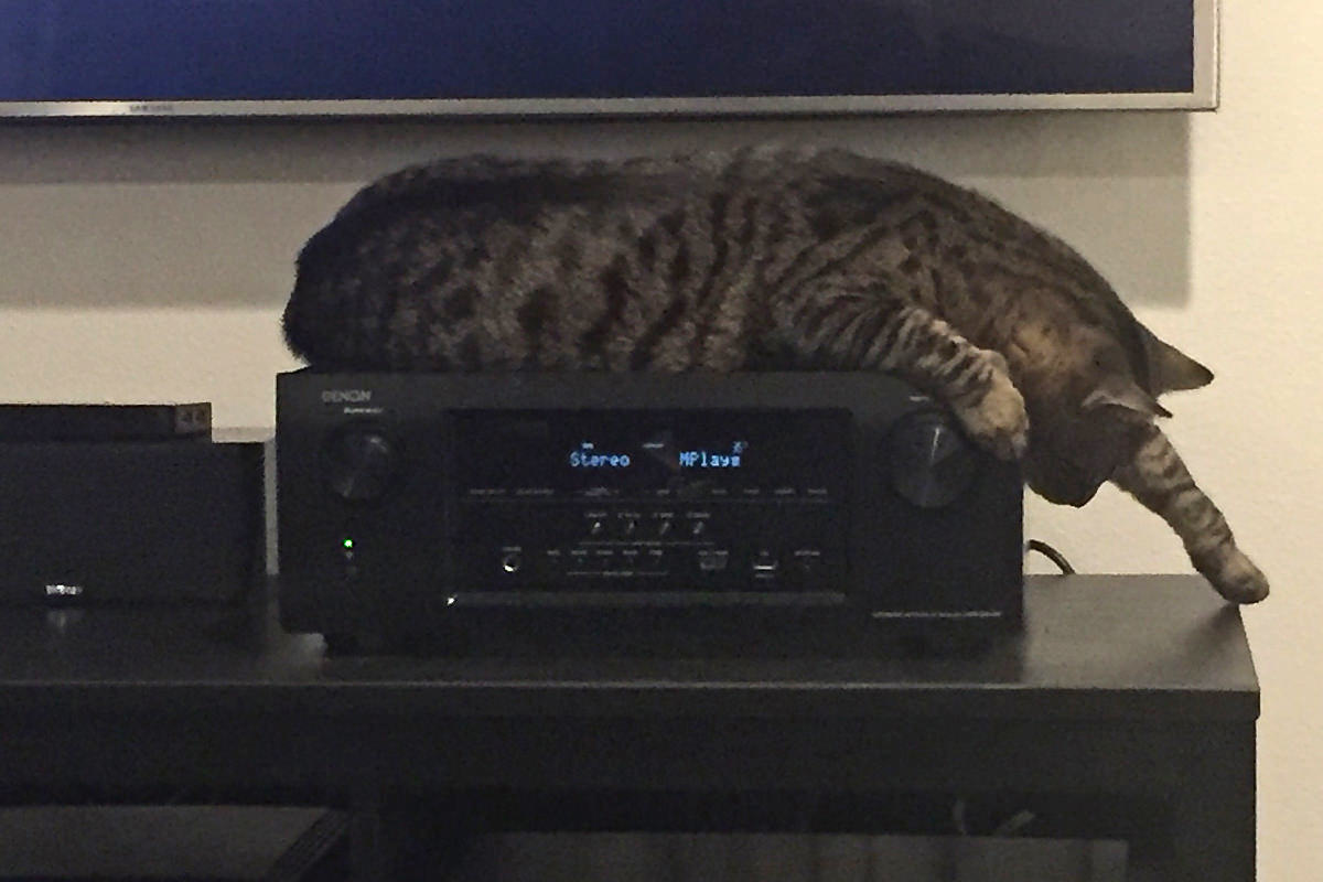 Jake oddly sleeping on the stereo!