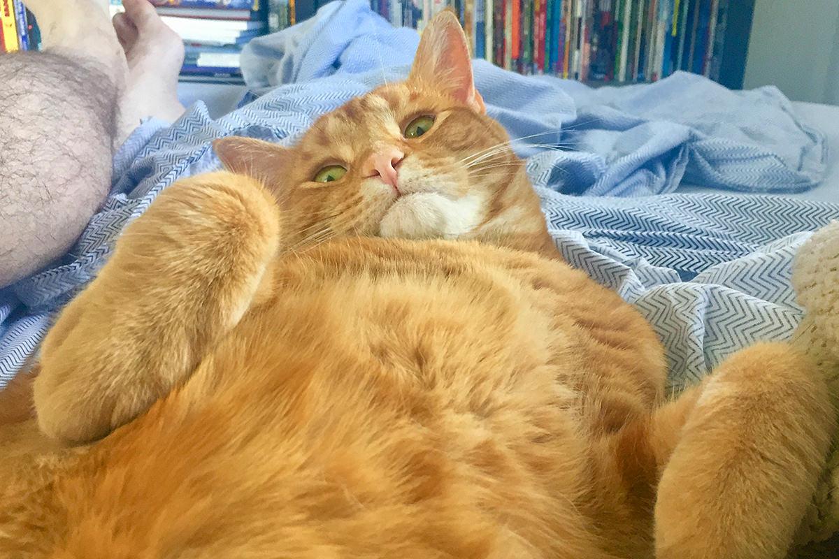 Jenny Bed Cat