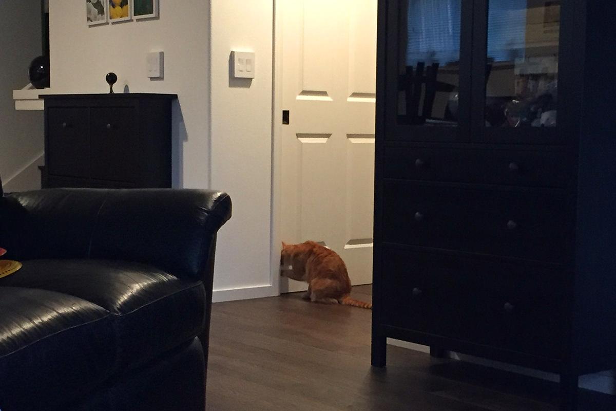 Jenny Wants Out!