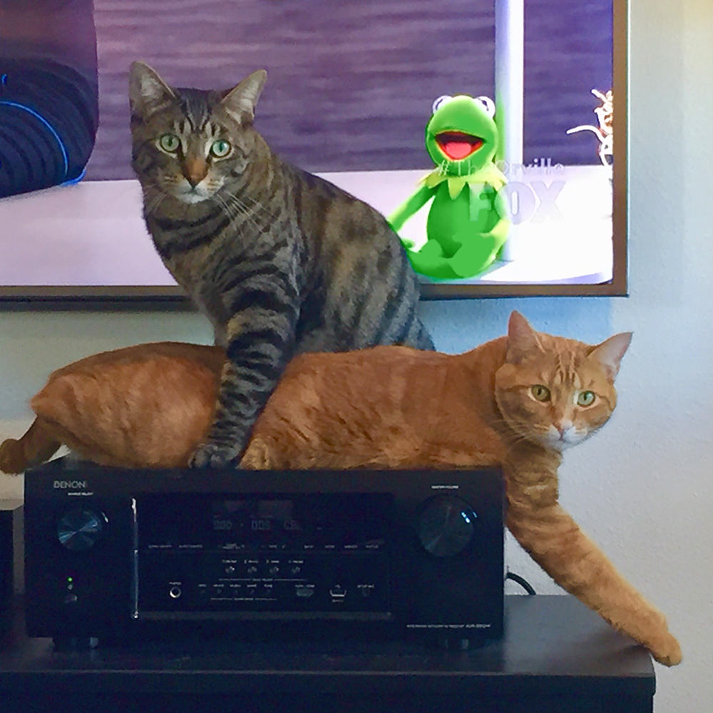 Jake and Jenny trying to fit on the stereo!