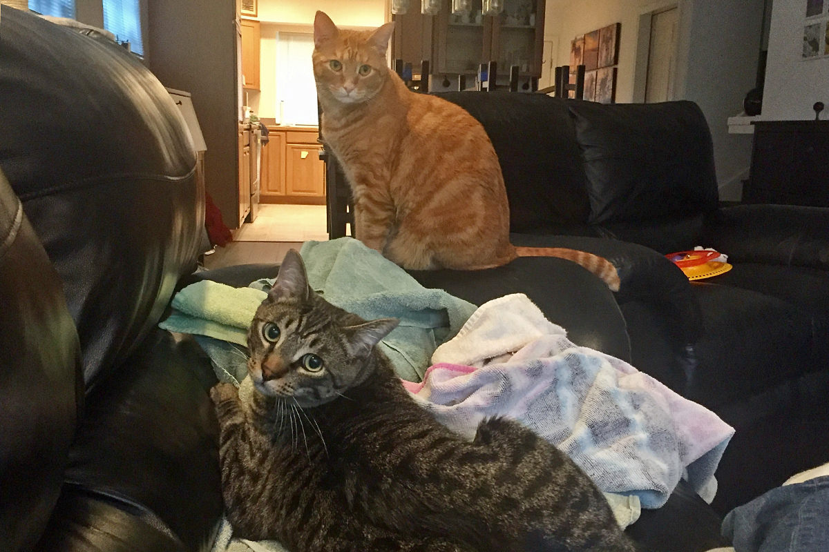 Cats on Towels!