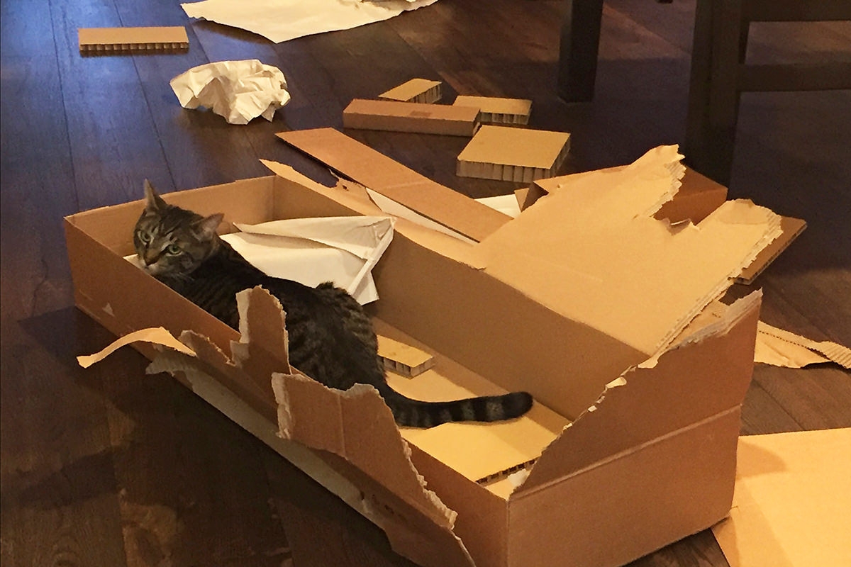 Cats Help Put Together IKEA
