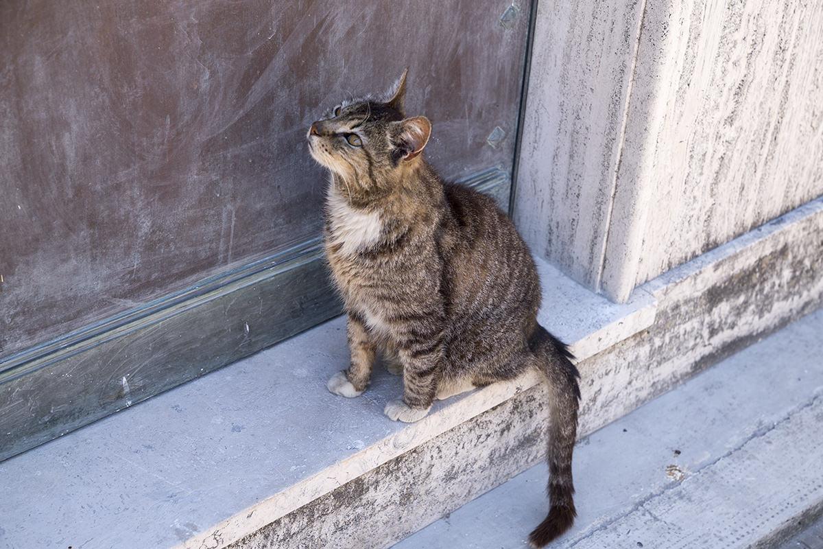 Recoleta Cemetery Cat