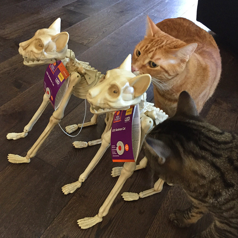Cats and Skeleton Cats