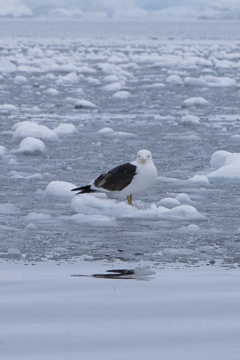 Bancroft Bay Birds