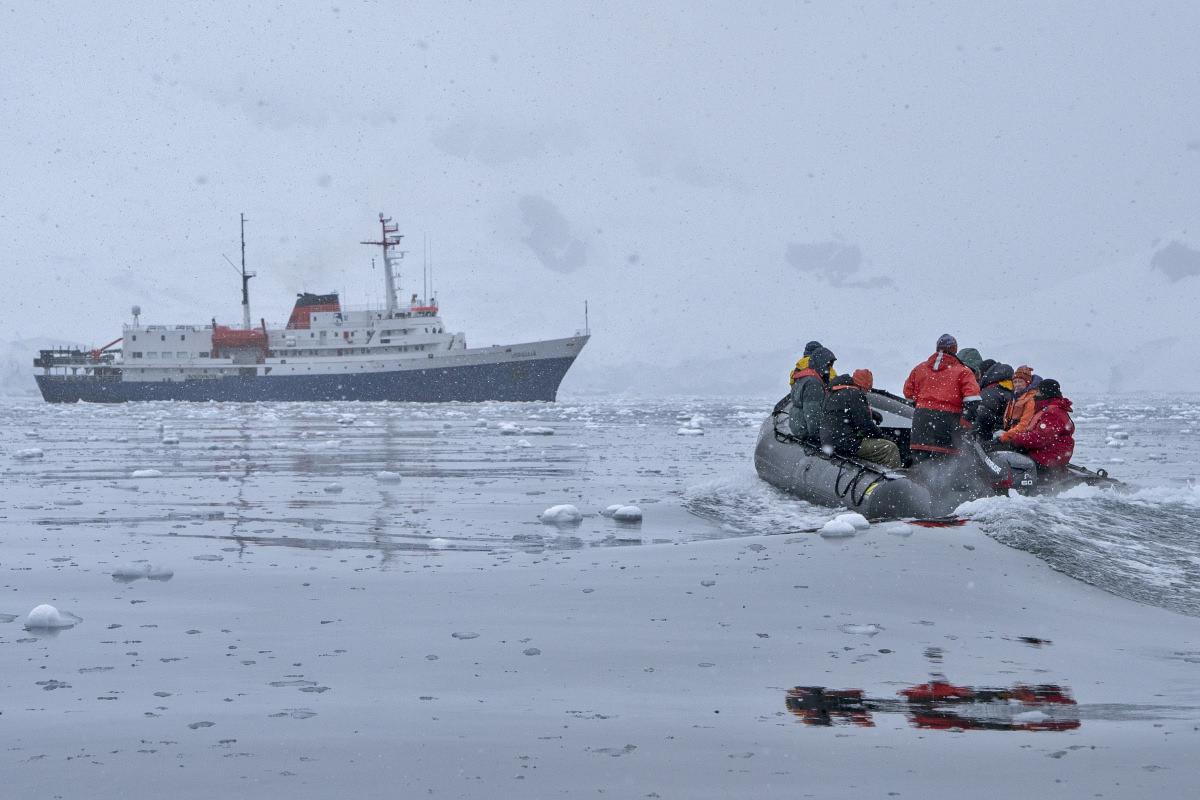 Bancroft Bay Whale
