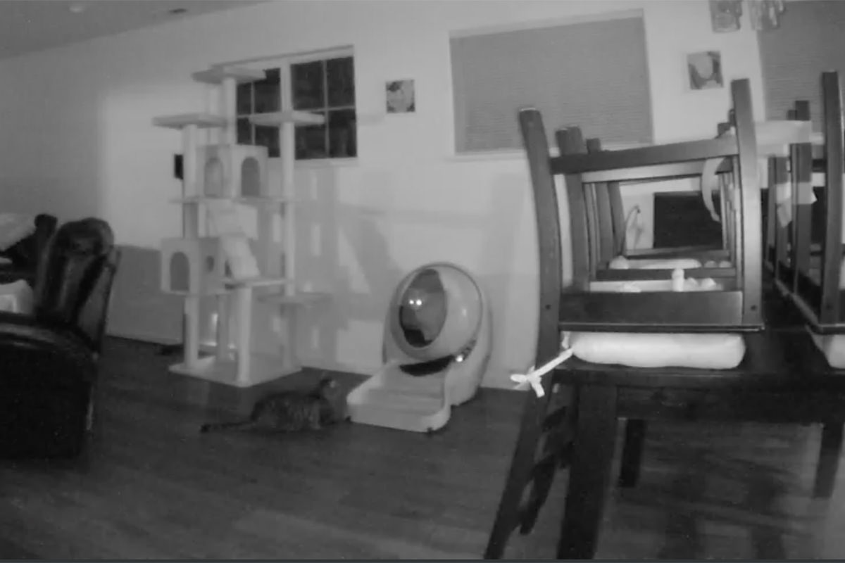 Jenny waiting for the Litter-Robot