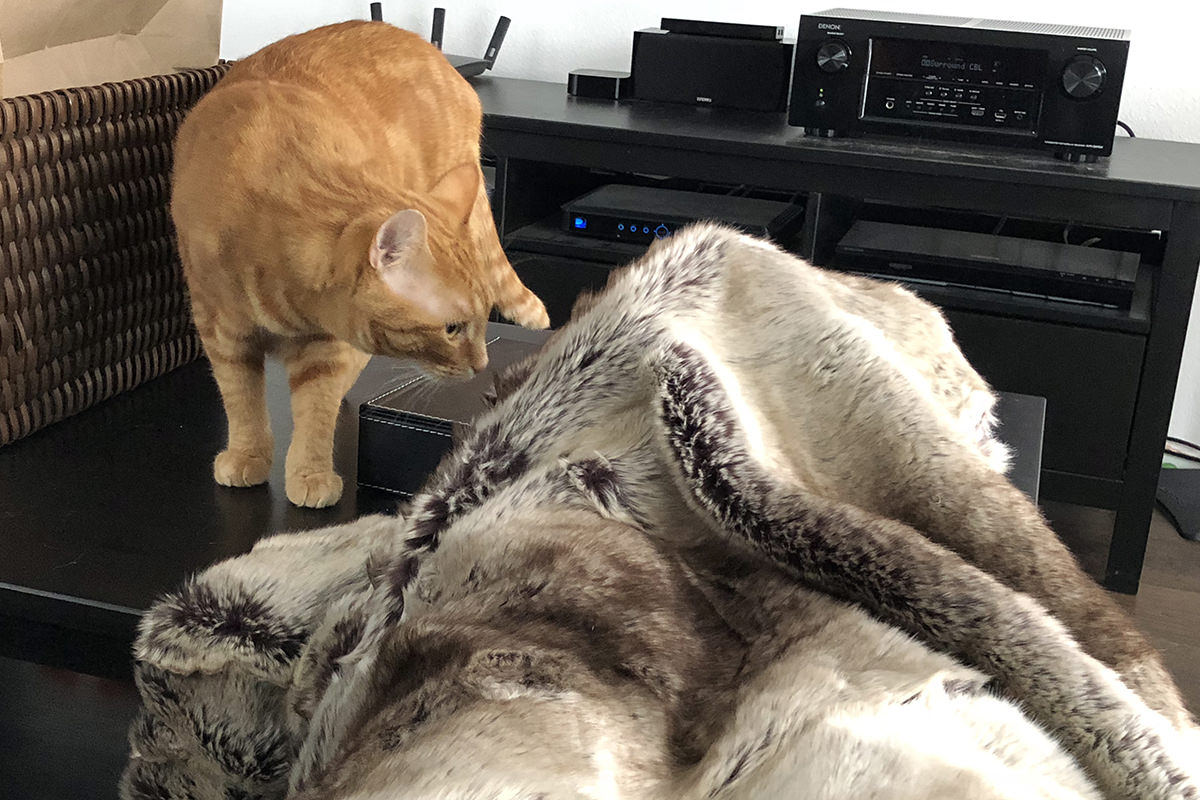 My Cats and the Blanket Monster