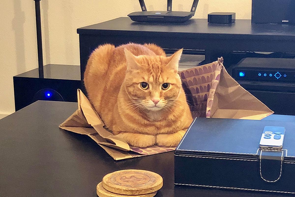 Jenny's Bag