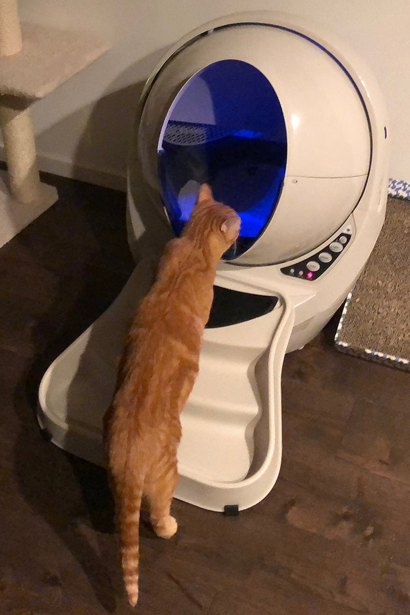 Jenny and Litter-Robot