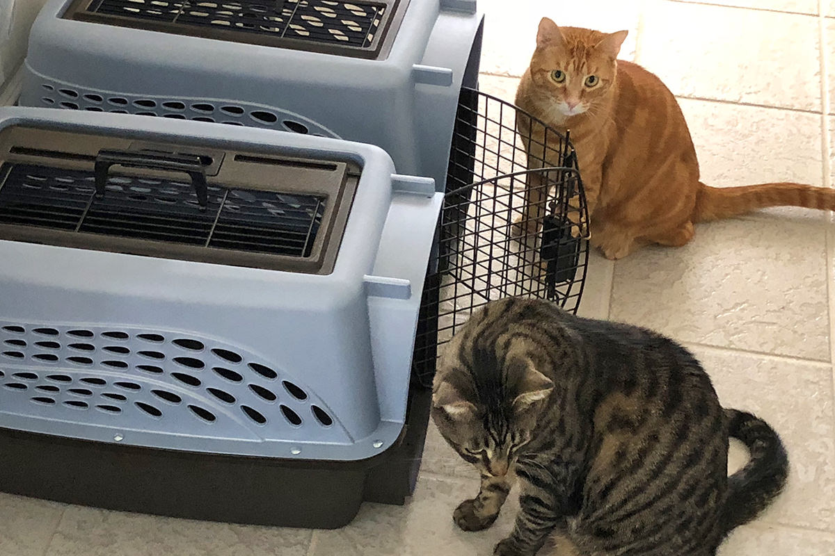 Jake and Jenny at the Kitty Carriers