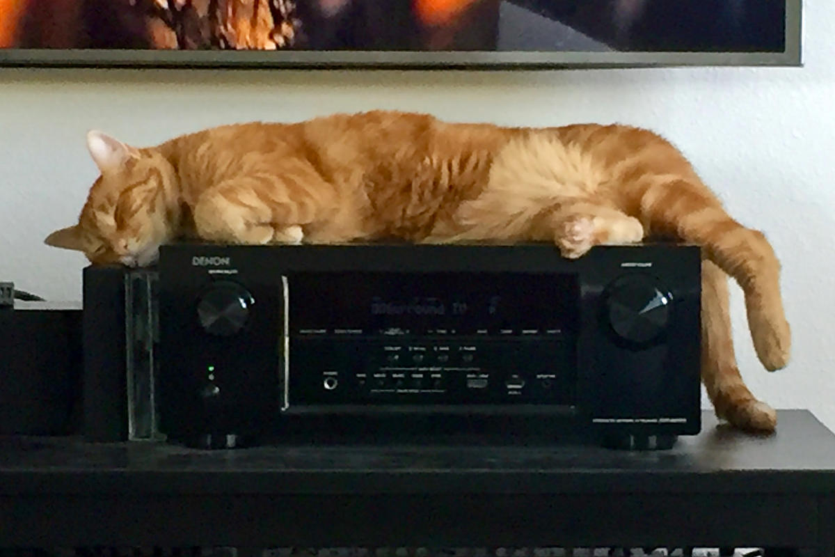 Jenny Sleeps on the Stereo Receiver