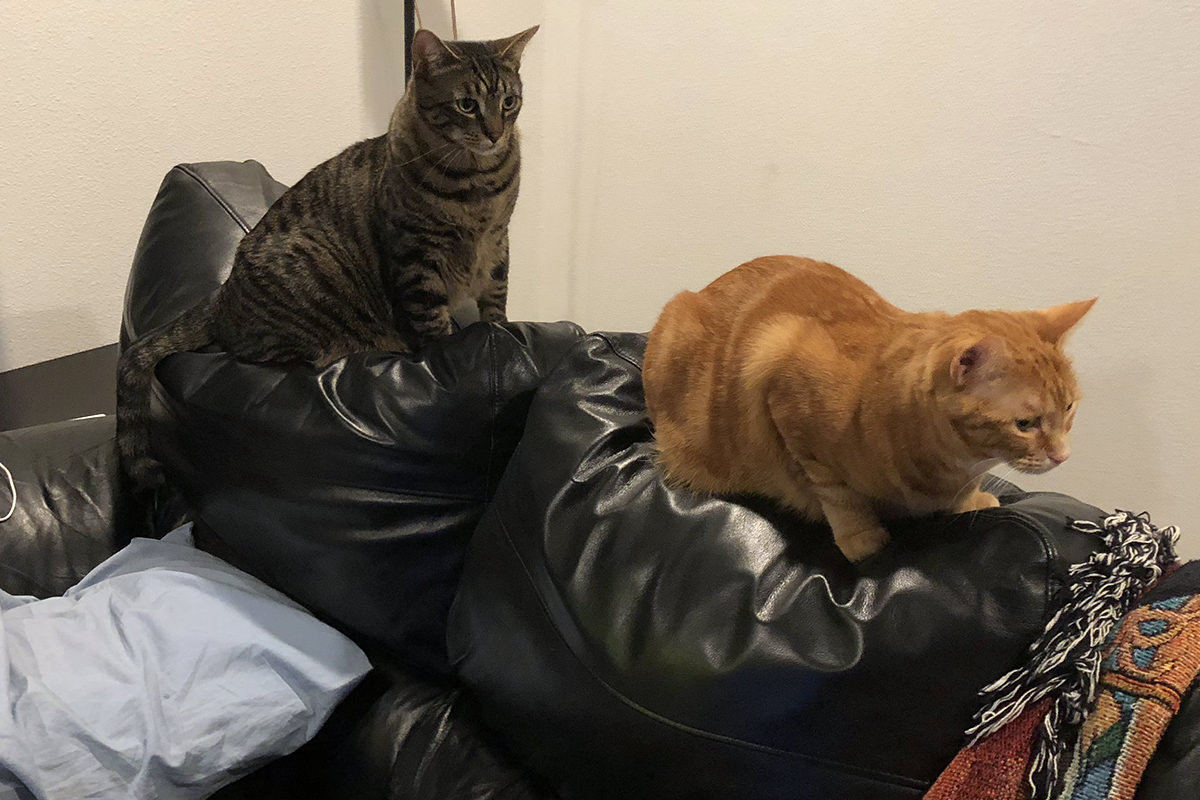 Cats on Couch Back
