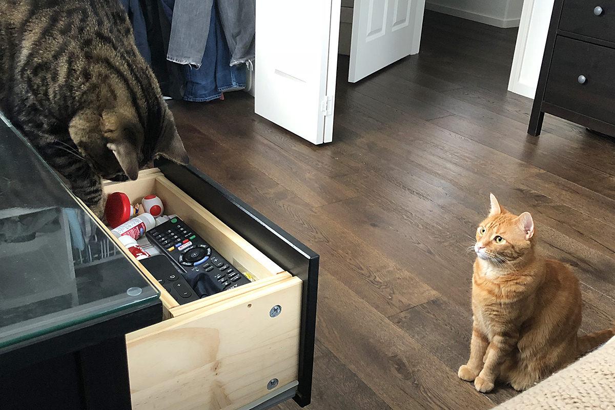 Cat Help!