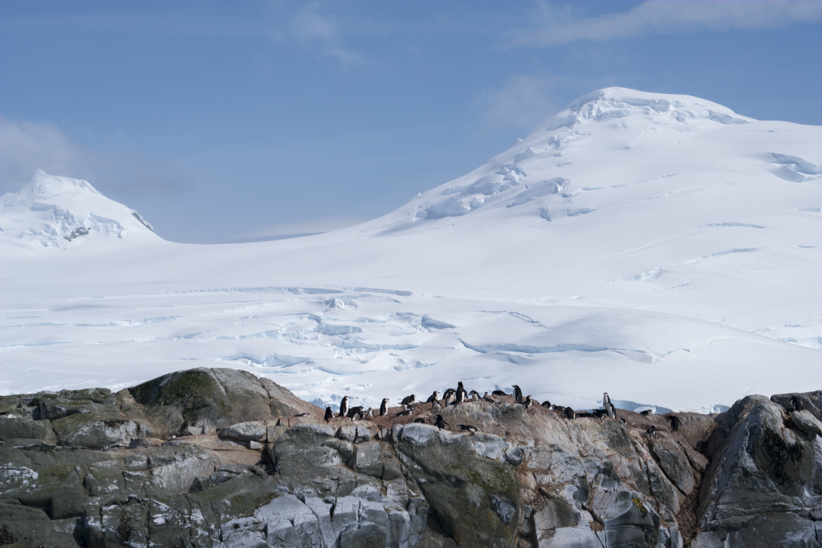 Penguins at Hydrurga Rocks