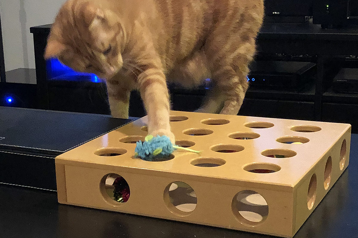 Jenny and the Cat Toy Box