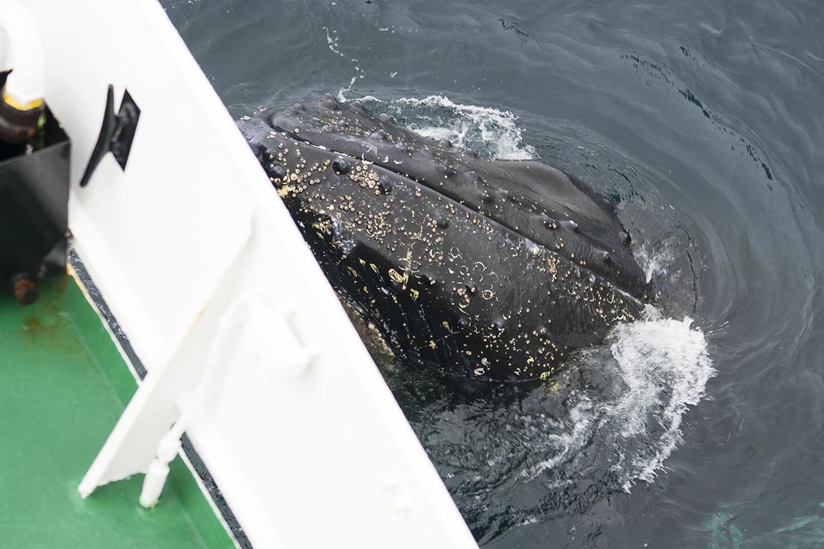 Whales of Antarctica