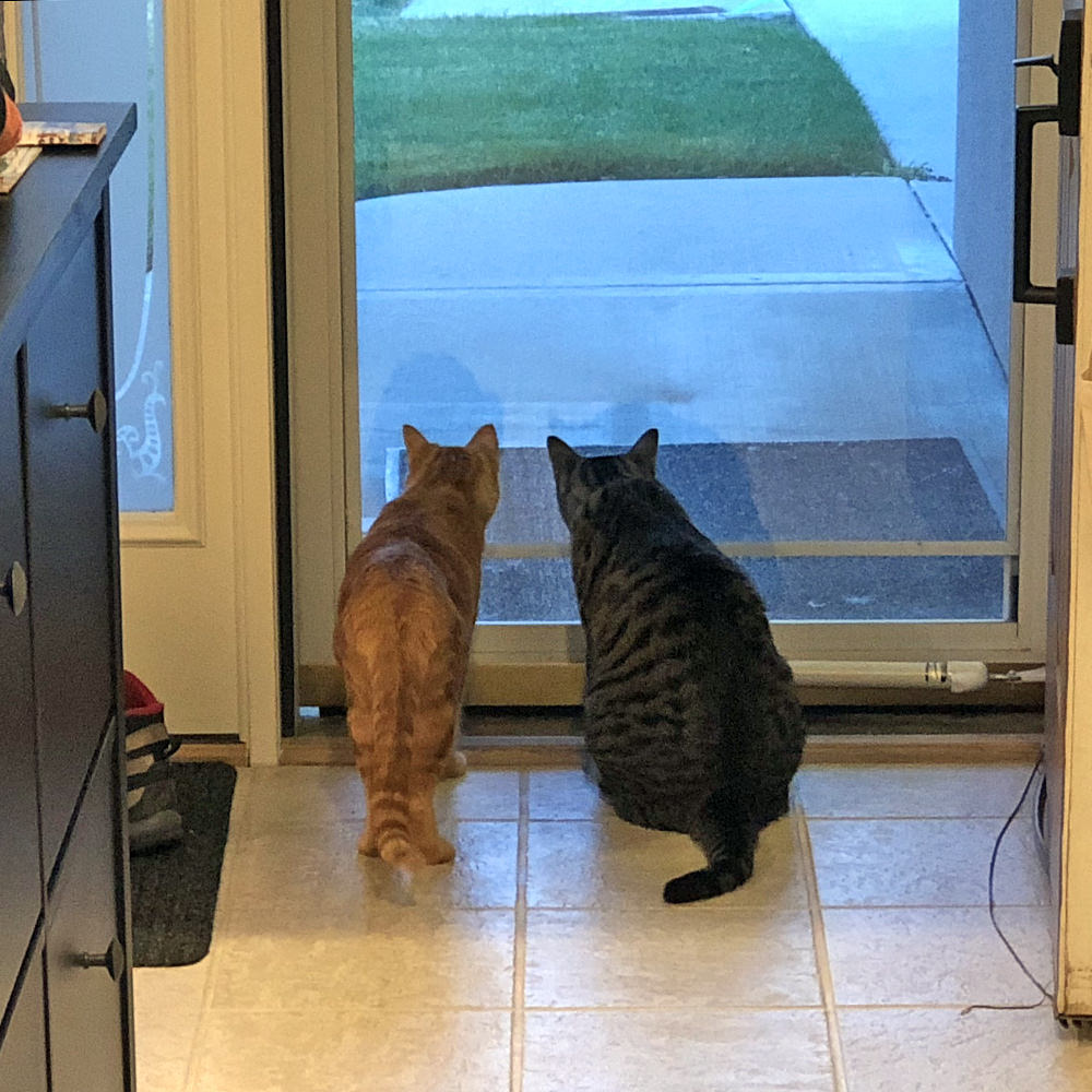 Cats on Lookout