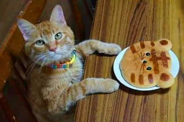 Cat Pancake Meme