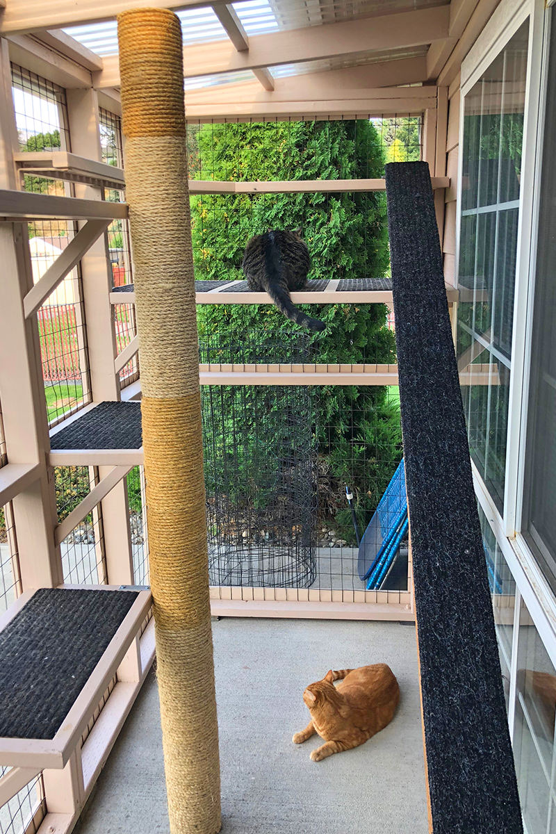 Cats in the Catio in the Daytime