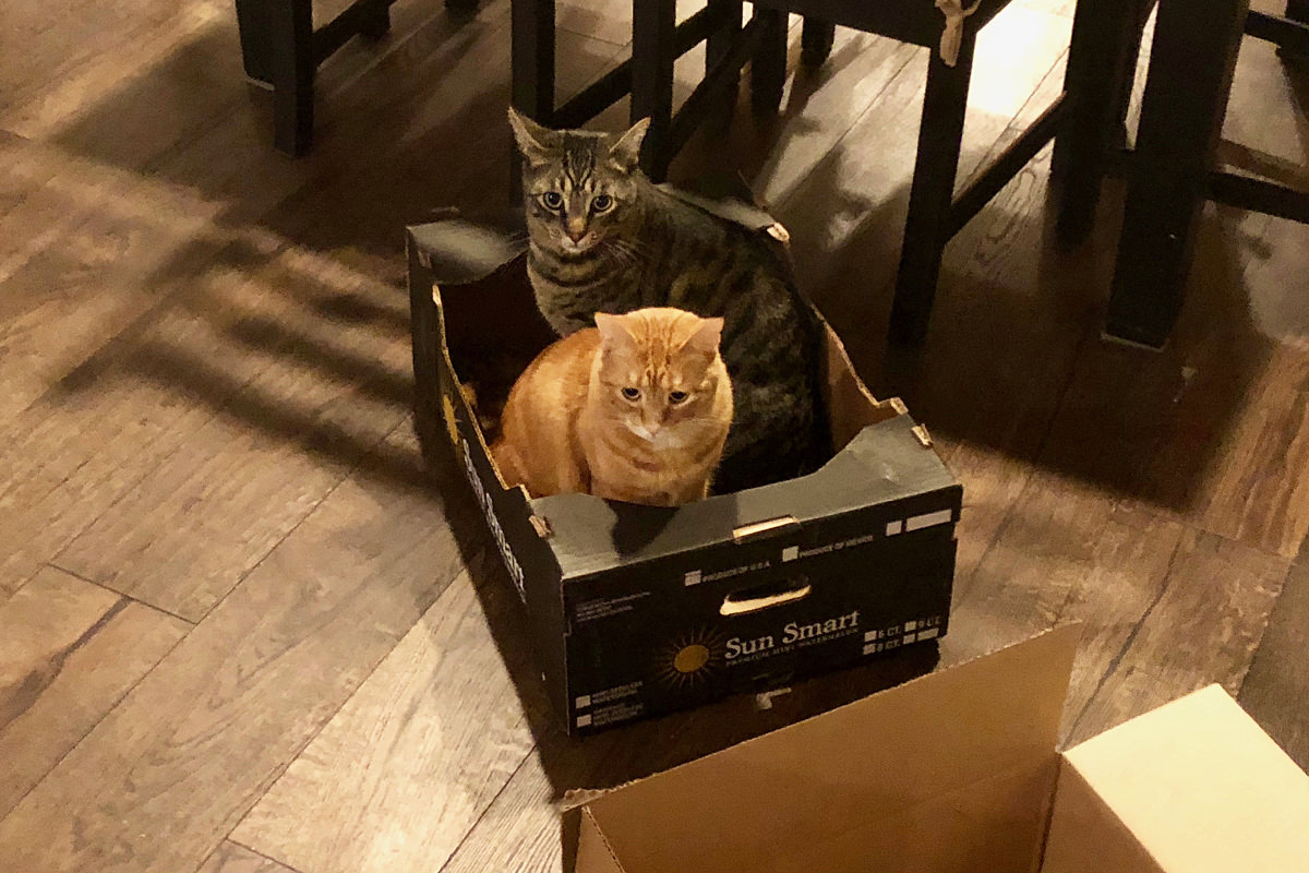 Jake and Jenny in a Box