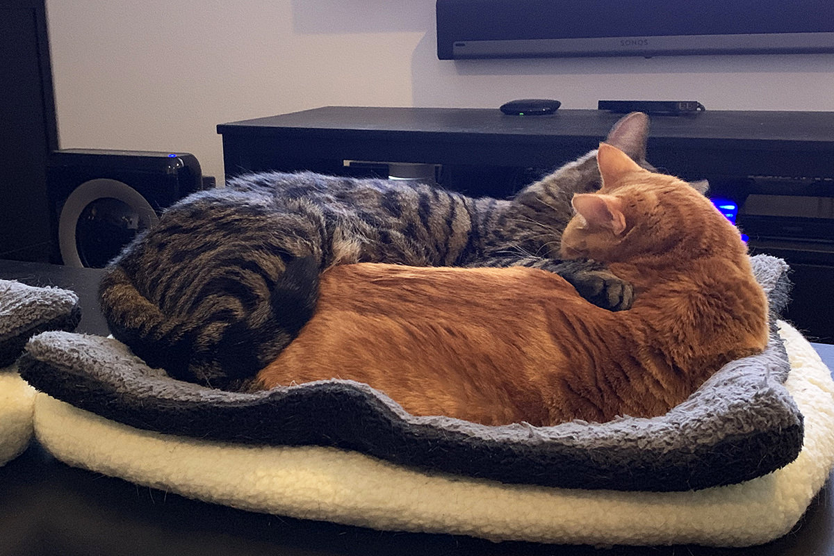 Dueling Cat Beds