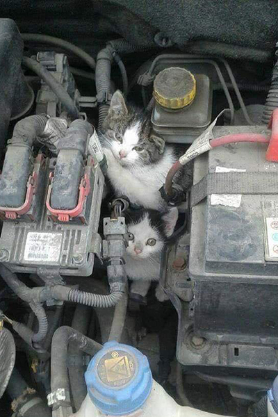 Cats in a Car Engine