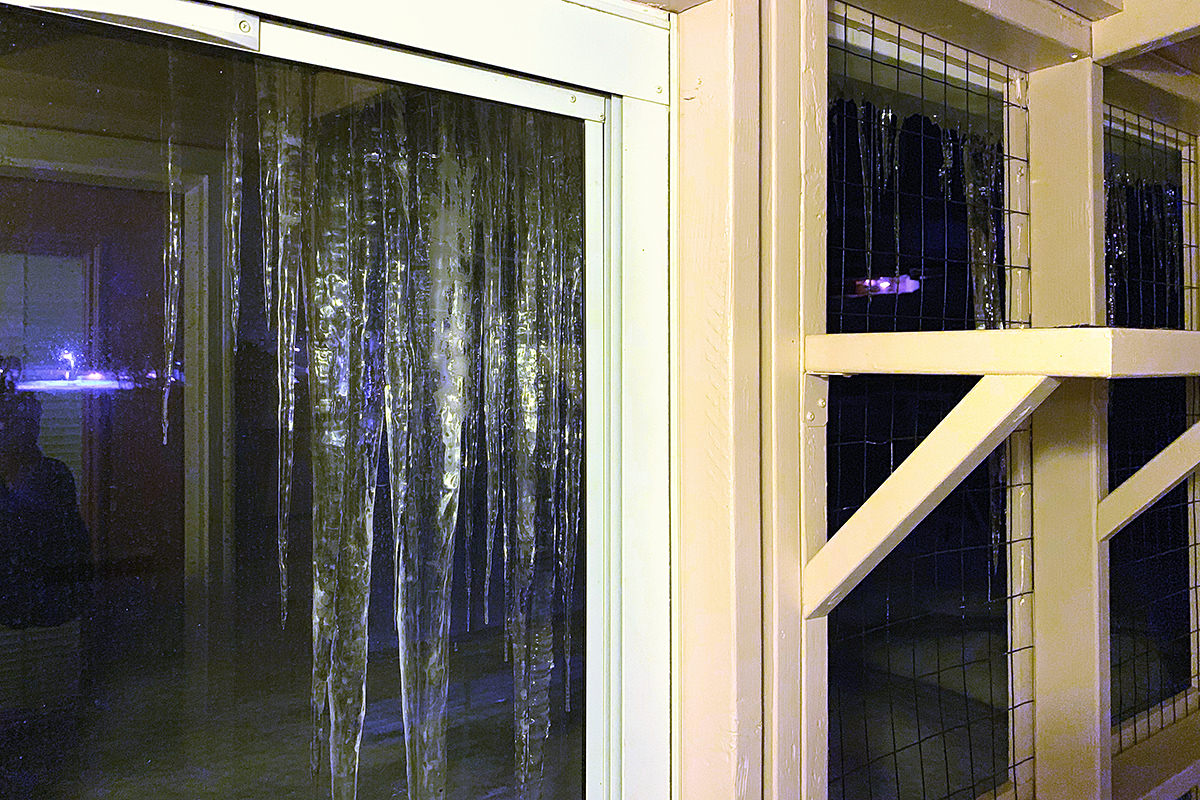 Catio Icicles at Midnight