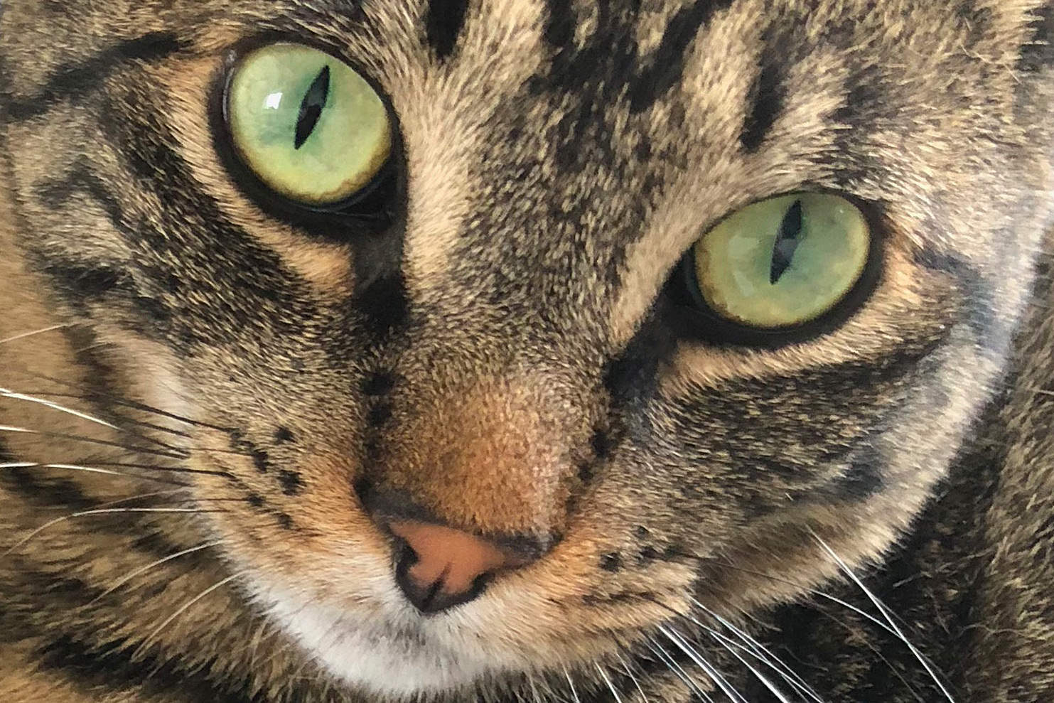 Fake Jake Opens Mail