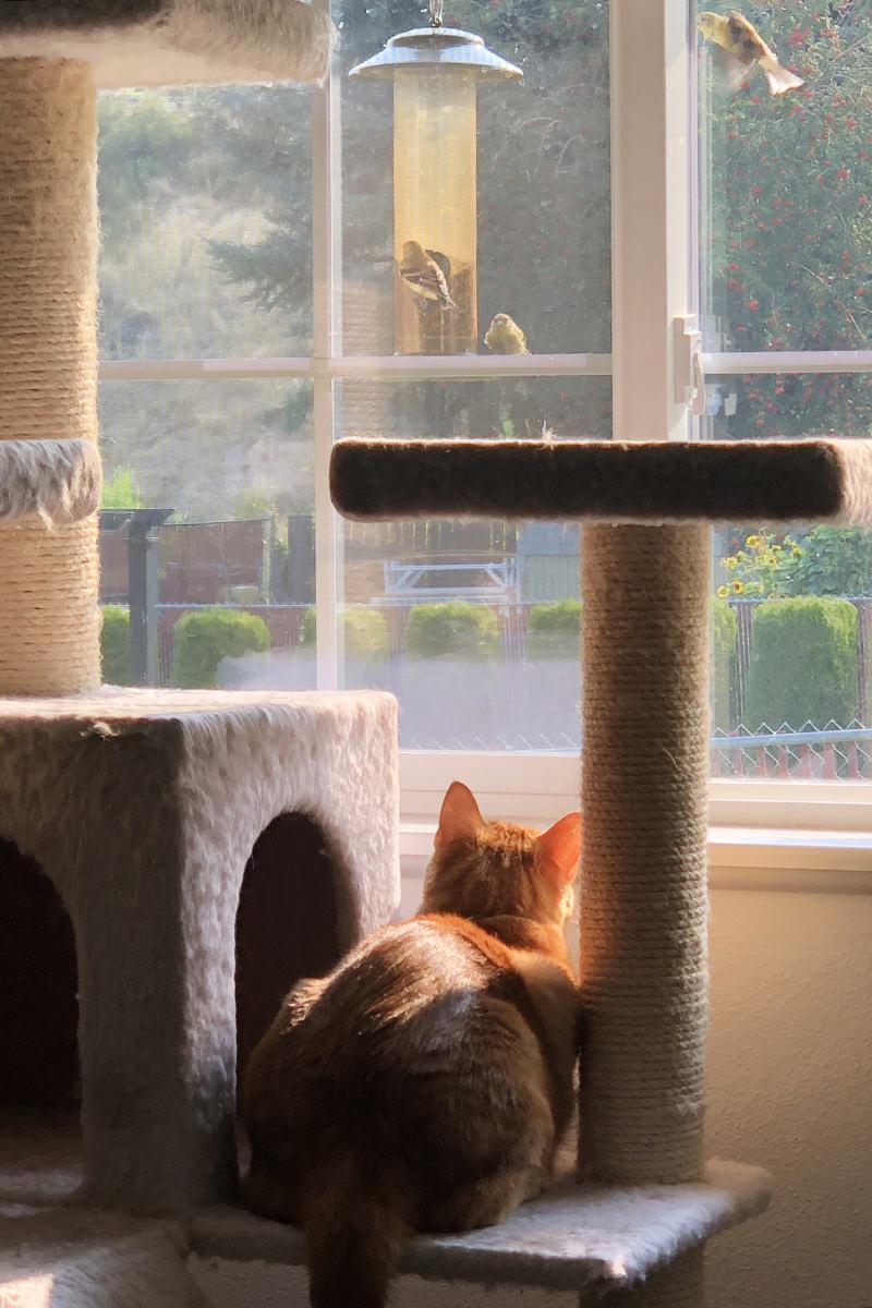Jenny the Bird Watcher