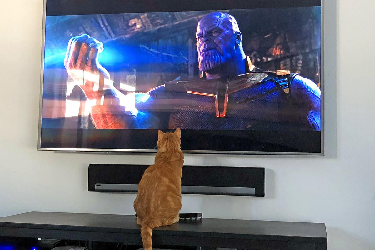 Jenny Loves Thanos