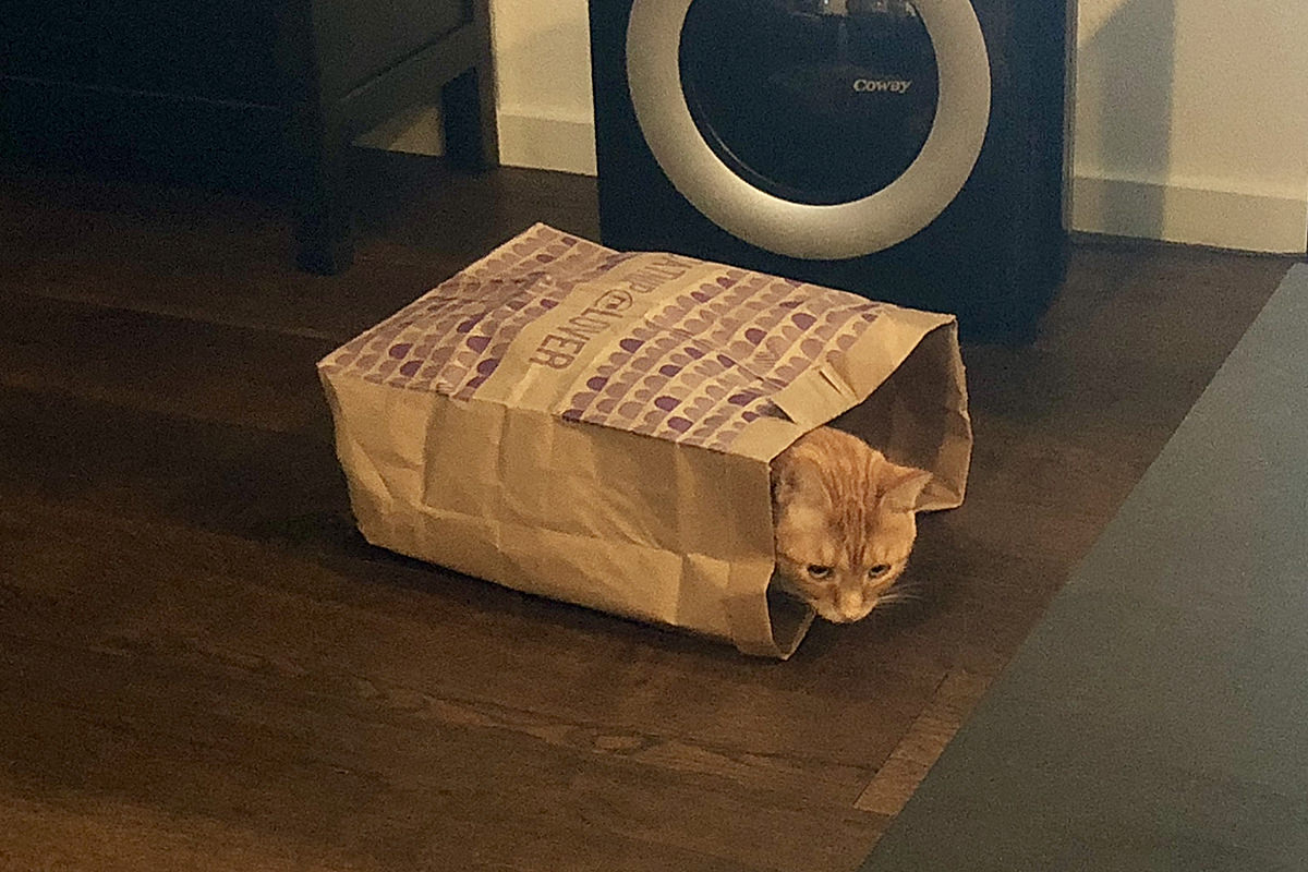 Jenny in a Paper Bag