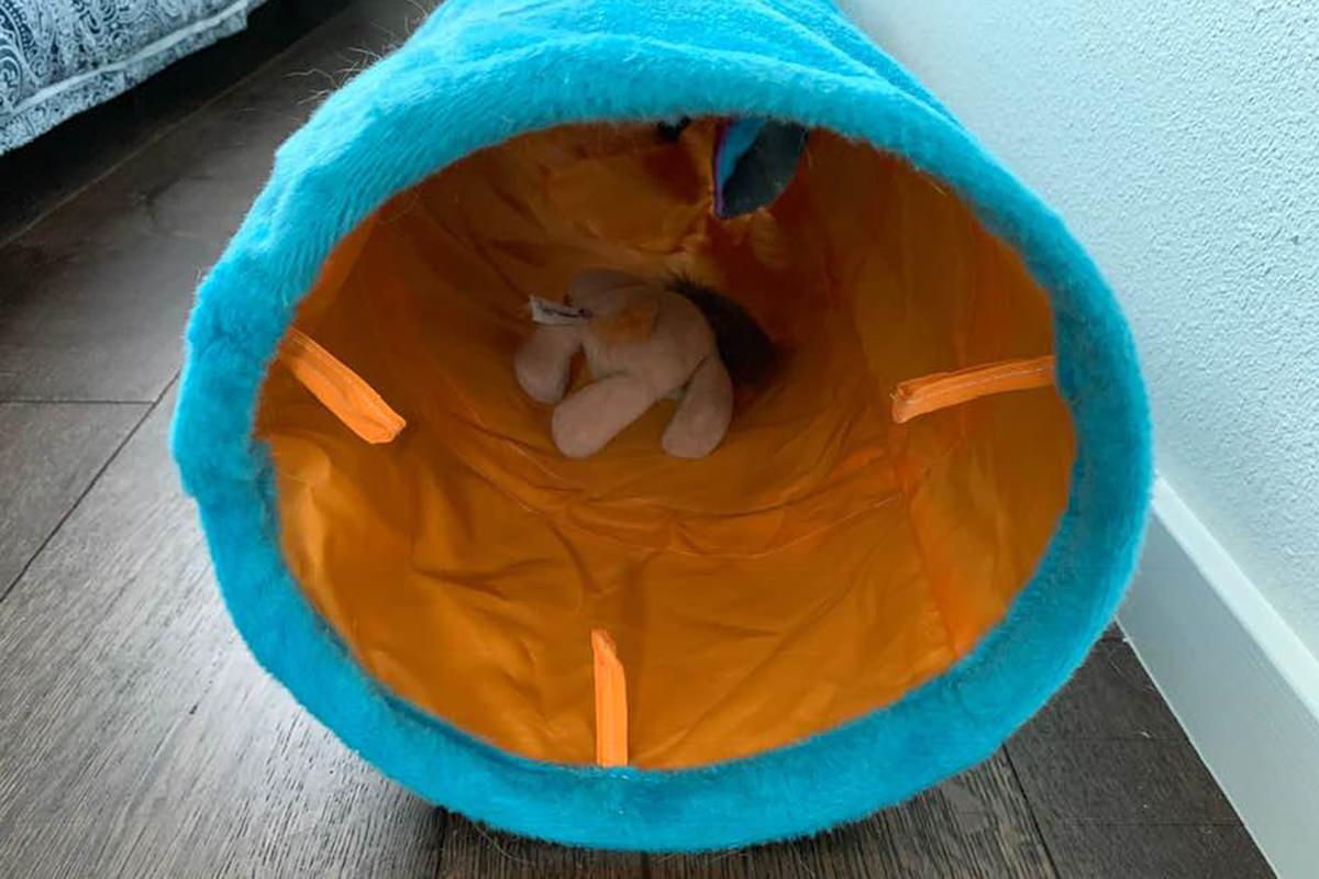 Jenny Puts Mufasa in a Tunnel