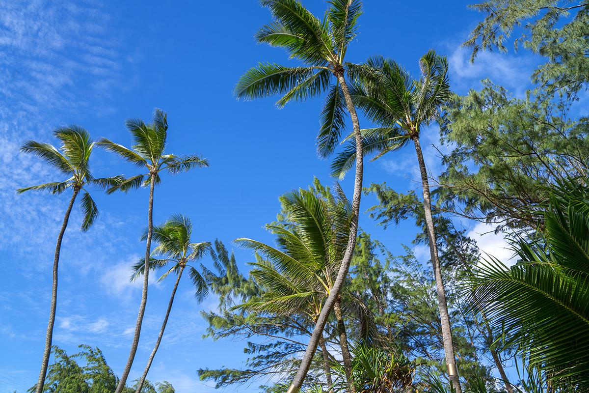 Oahu North Shore Beach