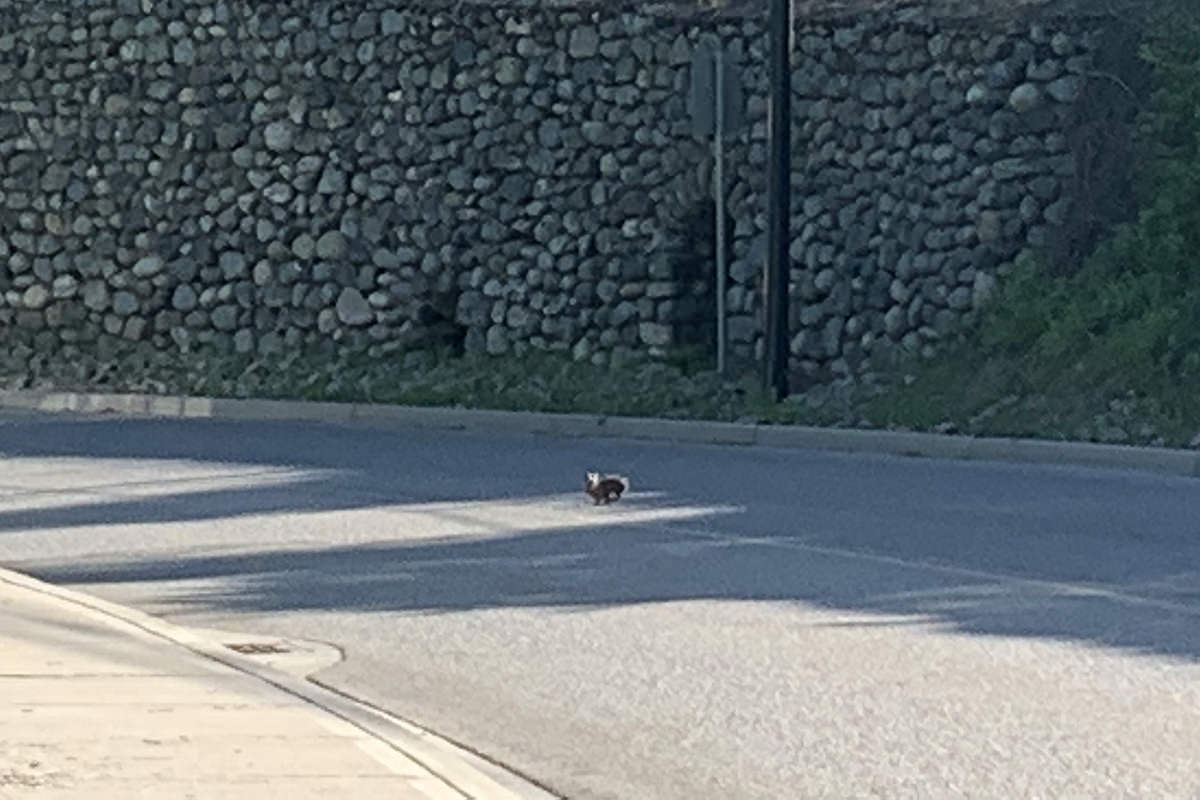 Bunny in the Road!