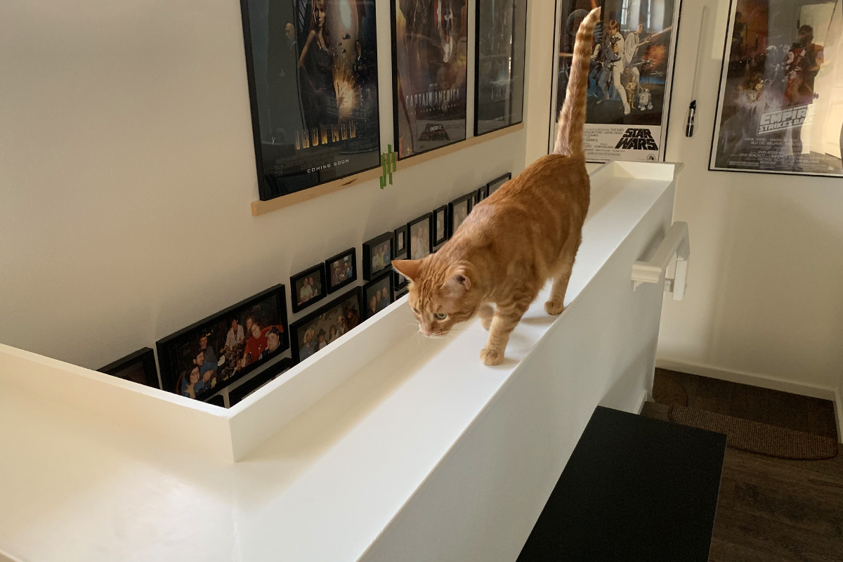 Cat Banister Tray Installed!