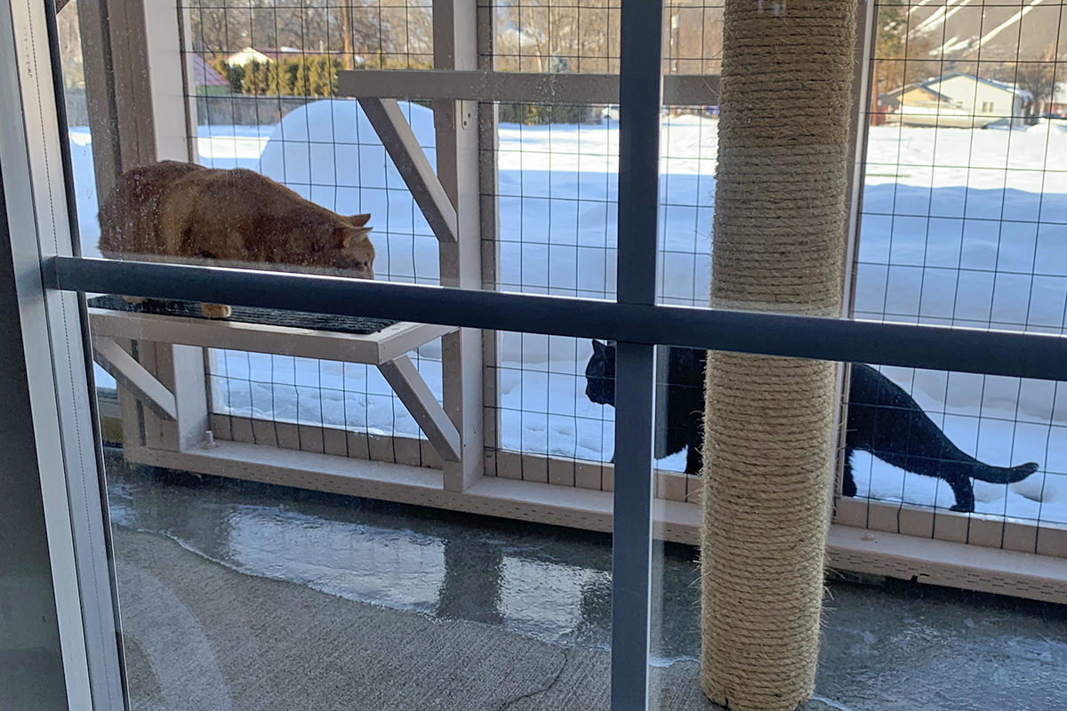 Jenny in the Catio Watching a Cat Walk By