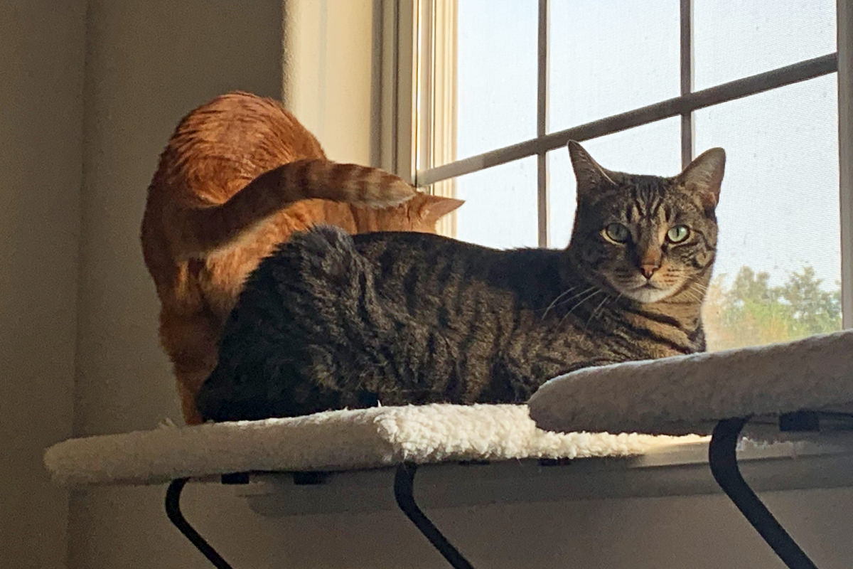 Jake and Jenny Sharing a Window Perch!