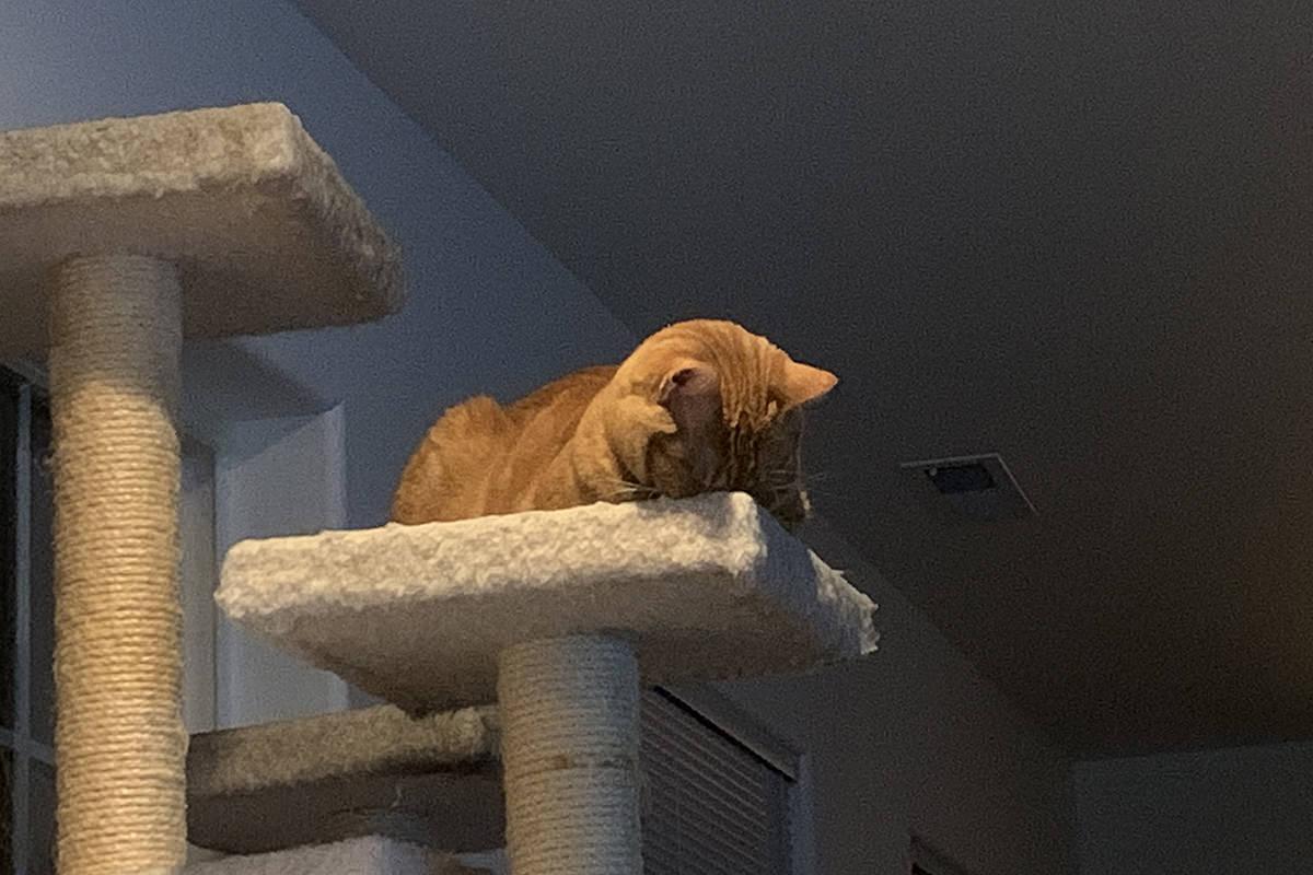 Jenny Falls Asleep
