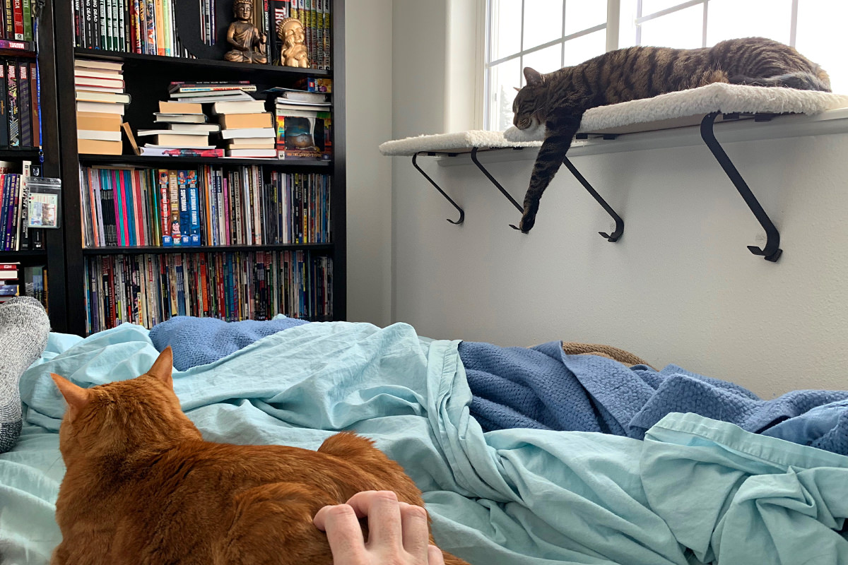 Sick in Bed with Cats!