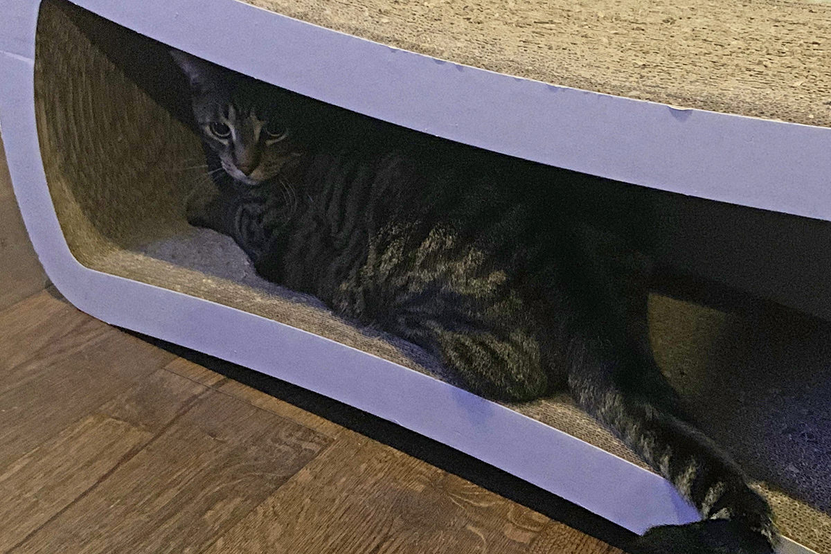 Jake hiding in his scratcher-lounger