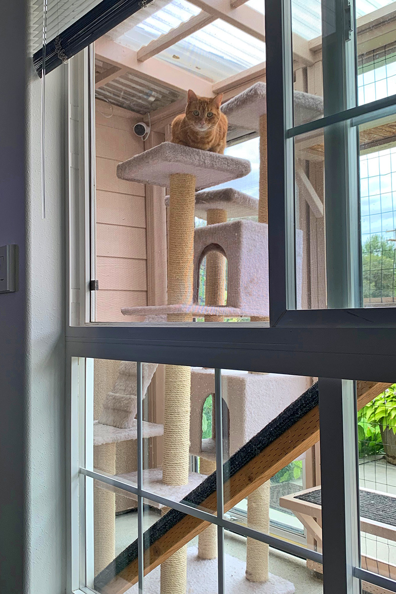 Jenny outside in the catio on top of her beloved cat tree, staring at me.