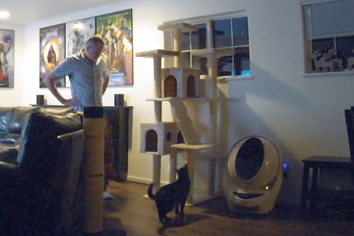 Jake climbing all over his cat tree again.
