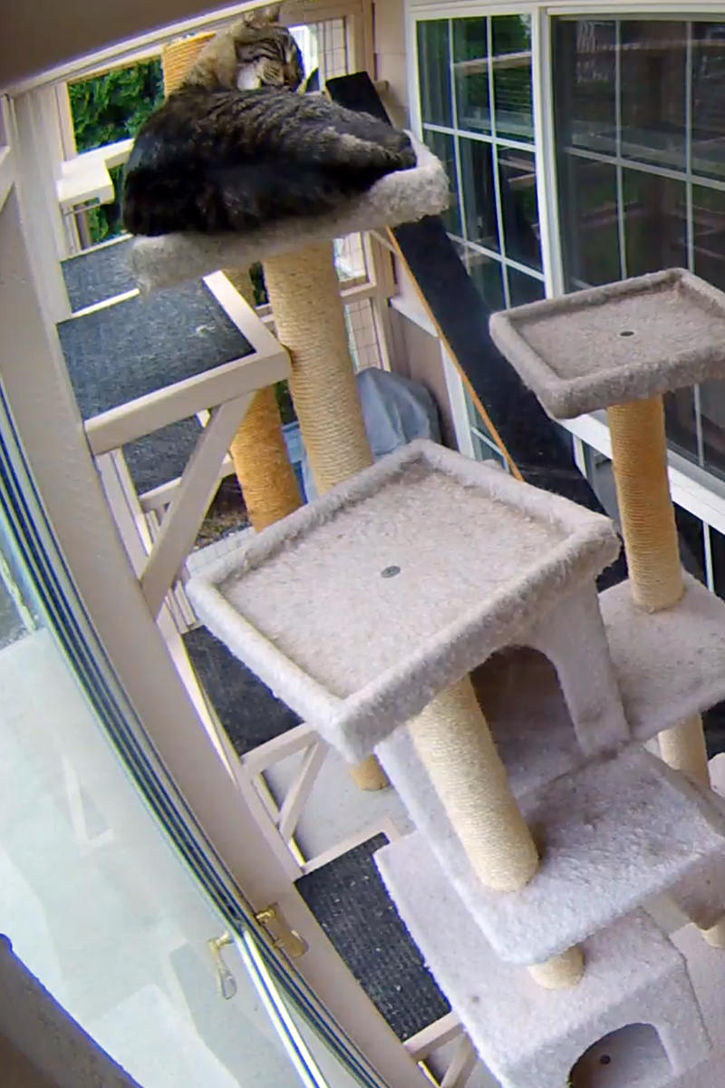 Jake out in the catio asleep on top of that filthy old cat tree.